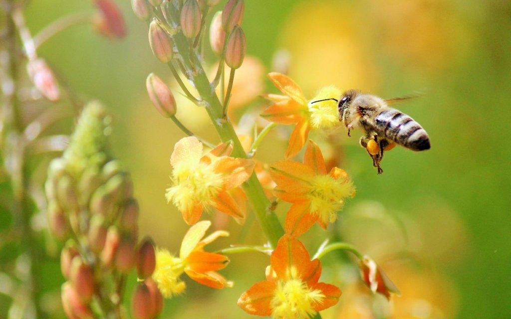 Региональное пчеловодство